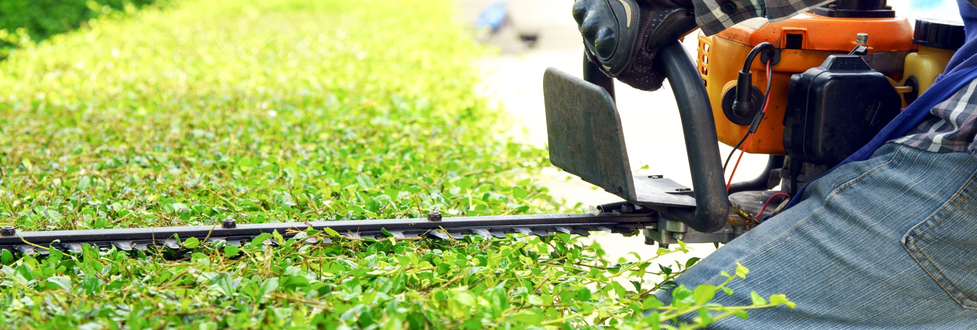Hedge Trimmer Features to Consider - Lawn